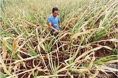 辽宁遭遇60余年来最重旱情:河道滴水不见 庄稼干旱而死